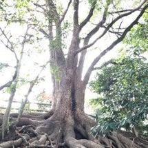 トトロがいそうな木を…