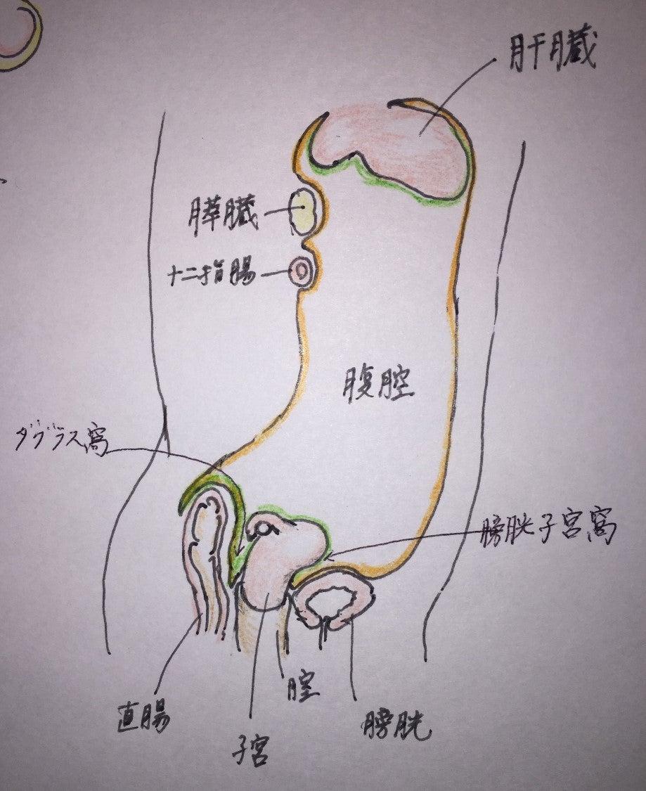 第2回 106G19 腹膜 | 現役産婦人科医による医師国家試験解説ブログ