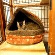 新・冬用猫ハウスの移…
