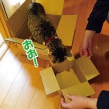 箱の好みは猫それぞれ