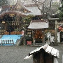 雪が降り始めました!