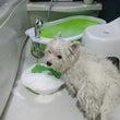 13日に3ワンお風呂…