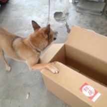 イヌと段ボール箱の関…