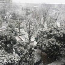 【東京都】こりゃ大雪…