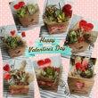 木箱のバレンタイン寄…