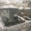 雪が・・・の画像