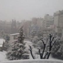 予報通りの大雪