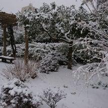☆東京も雪景色☆