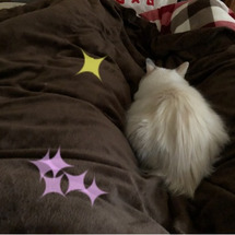 ON猫様ฅ•ω•ฅ