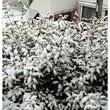 東京23区でも大雪警…