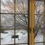 ミモ座11歳 大雪で…