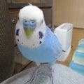 うちの幸せの青い鳥