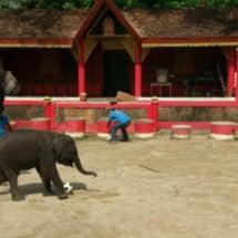 タイの個サル