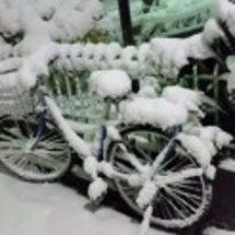 大雪(>_<)