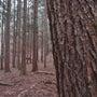 森の時間、森の声