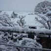 練馬は大雪、外に生きる猫は…