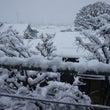 練馬は大雪、外に生き…