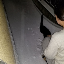 雪の中も猫梅(追記写…