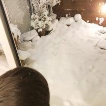 雪。。。大混乱