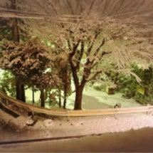 昨日の夜は積雪30c…