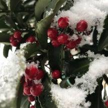 雪やこんもり
