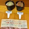 四季彩応神さん、メデルさん、kakamico17さんからの贈り物。