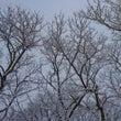 初雪が降った日…