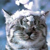 雪の日ならではの、、…