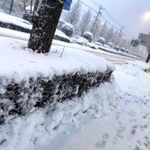雪雪雪ー!!!。