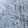 雪です、そしてカメラ…