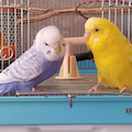 小鳥玩具店宇里と愉快な仲間たち