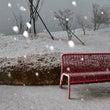 昨日は雪、明日は今年…