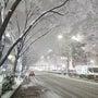 東京は街一面が銀世界…