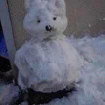 久しぶりの積雪、雪ド…