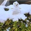 雪の影響。