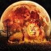 【1/29〆切、1/31開催】獅子座の満月一斉ヒーリングのご案内~ブルームーン&皆既月食~