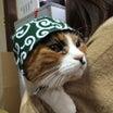 大人猫魅力増大PR促進(ながっっ)キャンペーン 第5弾
