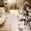 雪積もる庭…多肉の運命はいかに‼︎