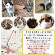 兵庫県発 数匹の猫の…