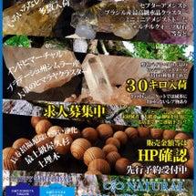 1日限りの原石祭り(…