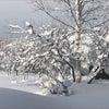 美しい雪化粧の画像