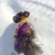雪遊び好き??