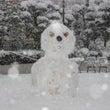 4年ぶり大雪による芸…