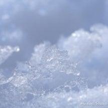 大雪の東京(備忘録)