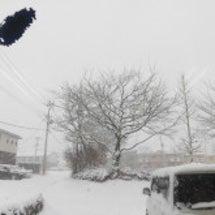★雪・雪・雪★