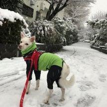 マリの初雪