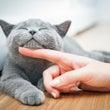 猫の日に考える、「人…