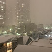 東京の雪はた~~~い…