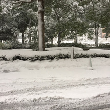 Snow Day❄️