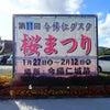 寒緋桜が咲いていた1/14の画像
